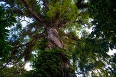Dschungelbaum Stockfotografie