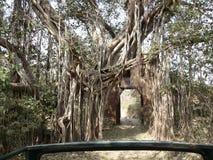 Dschungelbaum Lizenzfreies Stockfoto
