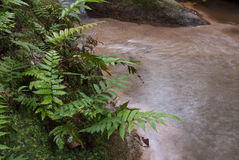 Dschungelfarn Lizenzfreies Stockfoto