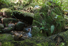 Dschungelfarn Lizenzfreie Stockfotografie
