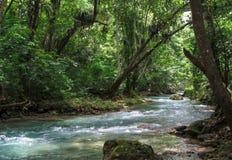 Dschungelfluß in Karibischen Meeren lizenzfreies stockfoto