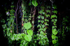Dschungelgrün lässt Sommerhintergrund in den exotischen Tönen Lizenzfreies Stockfoto
