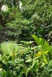 Dschungelhintergrund Stockfotos