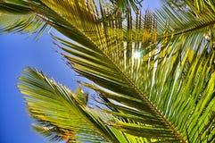Dschungelhintergrund von Palmblättern Stockfotografie