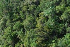 Dschungelkabinendach Lizenzfreie Stockfotos