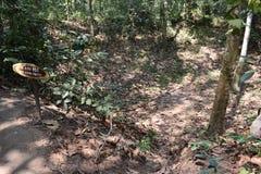 Dschungellandschaft mit einem Bombenkrater an den Vietcong Tunnelsystemen im Cu-Chi in Vietnam, Asien Stockbild