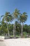 Dschungelpalmen und Dschungelwald auf einem Sand setzen in Koh Samui-Insel in Thailand auf den Strand Stockfotografie