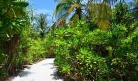 Dschungelreise Lizenzfreie Stockfotografie