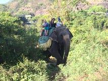 Dschungelsafari auf Elefanten Lizenzfreies Stockfoto
