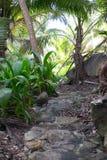 Dschungelspur lizenzfreie stockfotos