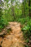 Dschungelspur lizenzfreies stockbild