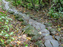 Dschungelspur zum Vulkan Mombacho Lizenzfreies Stockbild