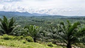 Dschungeltal von oben Stockfoto