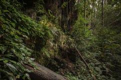 Dschungelwald, Thailand Lizenzfreies Stockfoto