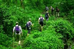 Dschungelwanderung stockbild