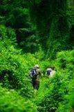 Dschungelwanderung stockfotografie