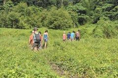 Dschungelwanderung Lizenzfreie Stockbilder