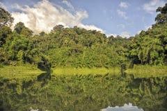 Dschungelwanderung lizenzfreie stockfotografie