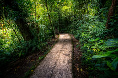 Dschungelweg Lizenzfreie Stockfotografie