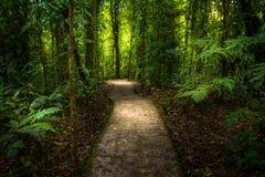 Dschungelweg Stockfotos