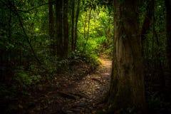 Dschungelweg Lizenzfreie Stockbilder