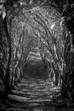 Dschungelweg Stockfotografie