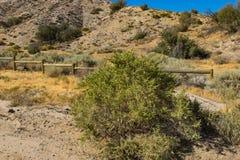 Désert Bush dans la région sauvage de prairie Photos stock