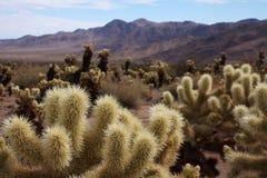 Désert de cactus Images libres de droits