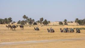 Désert du Sahara Images stock