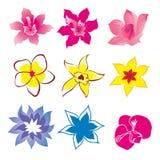 Dset de fleur Photo stock