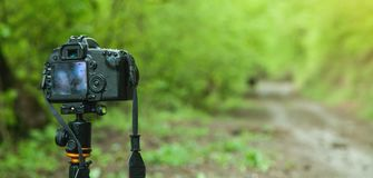 DSLR camera in forest background royalty free stock photo