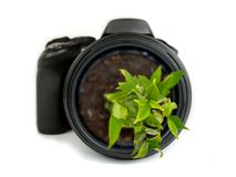 DSLR camera with a plant growing out of the lens - isolated on white background Stock Photos