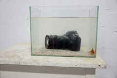 Dslr digital camera submerged in an aquarium. Dslr digital camera submerged a gold fish in aquarium Royalty Free Stock Images
