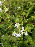 Dslr kwiatu fotografia zdjęcia stock