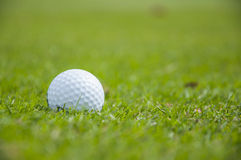 Détail de boule de golf sur l'herbe Photos libres de droits