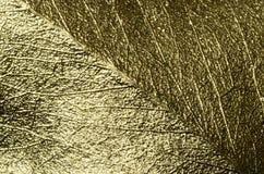 Détails d'or de macro de feuille Photo stock
