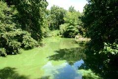Détails de Central Park Image libre de droits