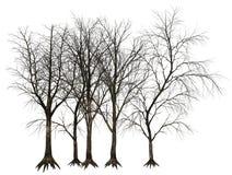 Dött träd, trädillustration Royaltyfria Bilder