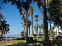 duże palmy w Miami plaży obraz royalty free
