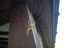 Duży ogrodowy pająk na sieci obrazy stock