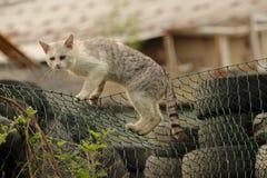 Duży szary aleja bezpański tomcat lub kot zostajemy na zielonym ogrodzeniu przy usuwania miejsca dżonką, banialuka stare opon opo zdjęcie stock