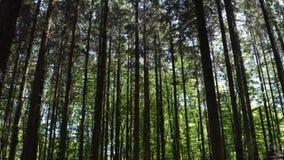 Duński las z słońcem w tle zbiory