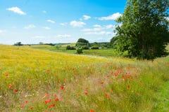 Duński lato krajobraz zdjęcia stock