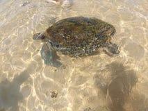 Duża żółwia hikkaduwa plaża, Sri Lanka zdjęcia stock