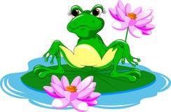 Duża żaba Fotografia Royalty Free