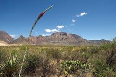 Duża chyłu park narodowy sceneria, Teksas, USA Fotografia Royalty Free
