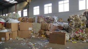 Duża fabryka Dla Przetwarzać papier i Carboard zdjęcie wideo