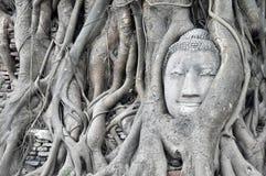 Duża głowa Buddha Zdjęcie Stock