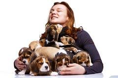 Duża grupa beagle szczeniaki i kobieta zdjęcia royalty free