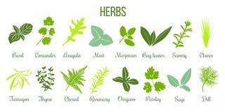 Duża ikona ustawiająca płascy kulinarni ziele mędrzec, macierzanka, rozmaryn, basil royalty ilustracja